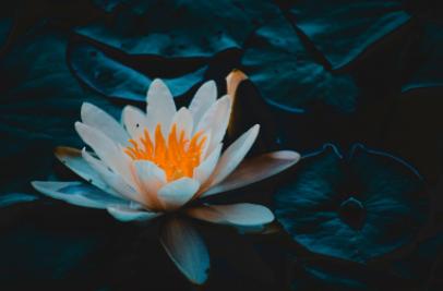centro-de-yoga-en-mostoles-respirayoga-blog-anahata-flor-de-loto