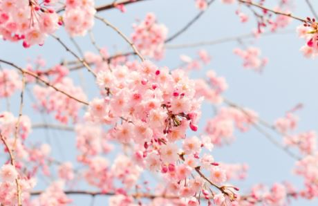 centro-de-yoga-en-mostoles-respirayoga-primavera