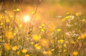 centro-de-yoga-en-mostoles-respirayoga-primavera- blog